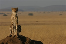 "Conservationists ""On the Fence"" About Barriers to Protect Wildlife in Drylands"