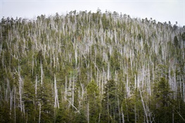 Climate Change and Shifting Alaskan Forests