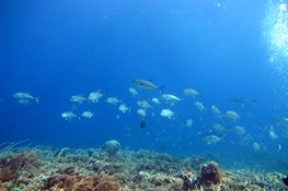 Newswise: Taking Stock of Indonesia's Reef Fishes