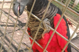 Protecting dead parrots to conserve the living