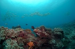 Marine scientists examine impacts of different fishing gear on coral reefs