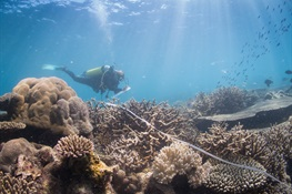 What do Functioning Coral Reefs Look Like?