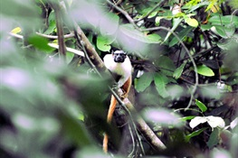 Newswise: Hot Mess: How Amazon Primates Will Respond to Climate Change