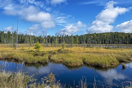 It's time to start paying attention to Canada's peatlands