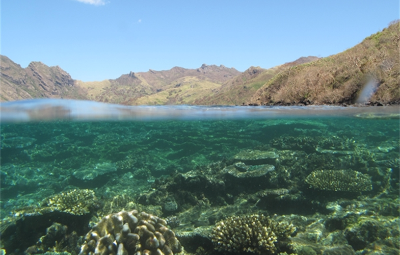 Scientists in Fiji are examining how forest conservation also benefits coral reefs and fish populations. CREDIT: Stacy Jupiter/WCS