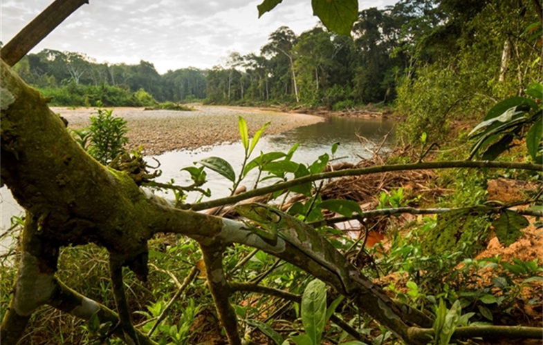 The forests of Madidi National Park in Bolivia. CREDIT: Rob Wallace/WCS.