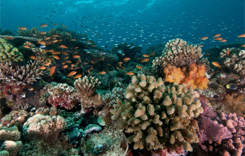 A coral reef off the coast of Fiji. CREDIT: Lill Haugen