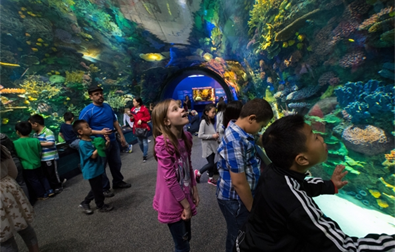 Through generous support from a variety of councilmembers and foundations, thousands of NYC schoolchildren from Title 1 schools engage in free STEM-based programming at the New York Aquarium. CREDIT: (c)Julie Larsen Maher/WCS