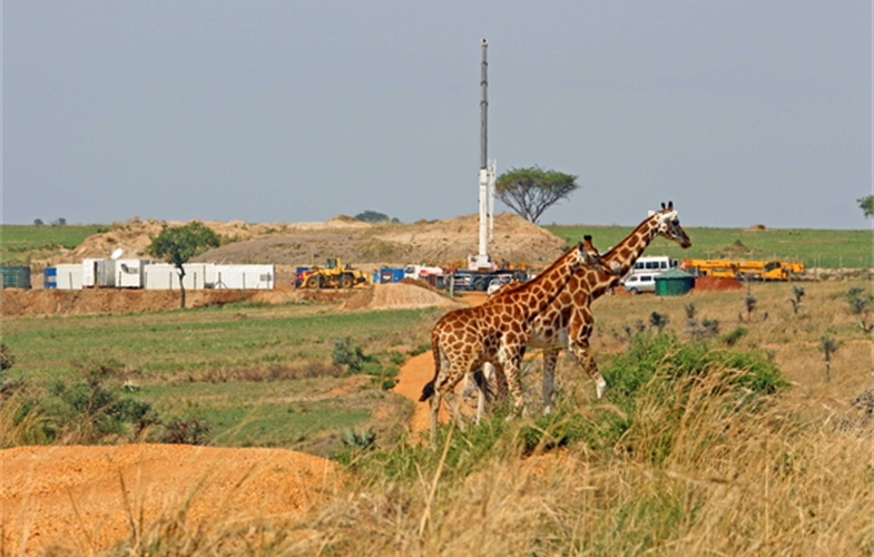 Giraffes and drilling rig CREDIT: Paul Mulondo/WCS