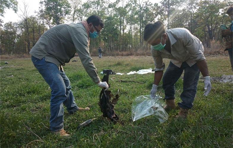 Community rangers disposing of a dead Giant Ibis CREDIT: WCS