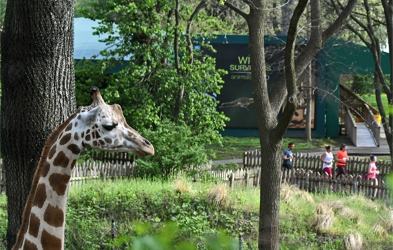 Bronx Zoo Holds 9th Annual Wcs Run For The Wild Newsroom