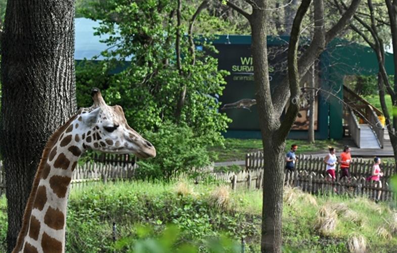 Bronx zoo 5k 2019
