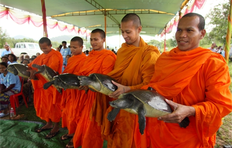 Monk with souther river terrapins during release ceremony cr: Allan Michaud