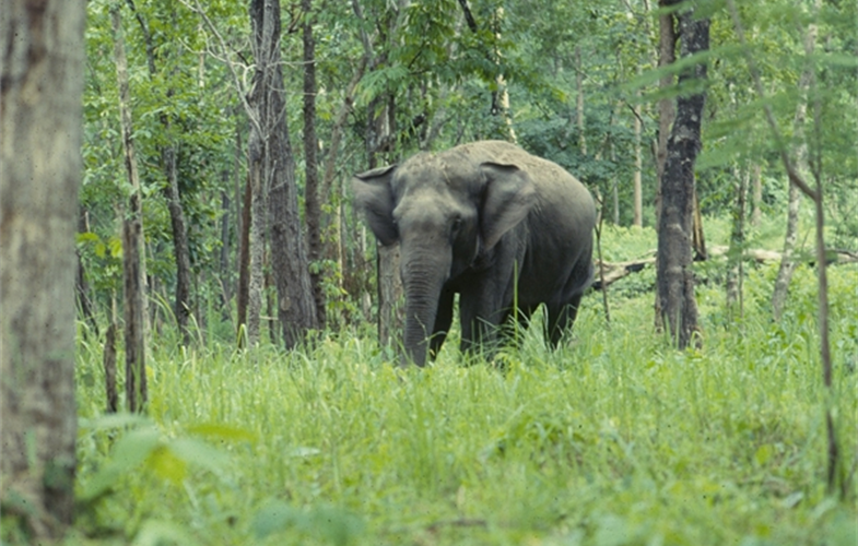 Myanmar Government Finalizes Plans For Elephant Conservation