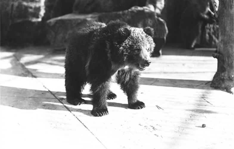 Wildlife Conservation Society_00461_Cyclone Bear_BZ_12 00 01.JPG