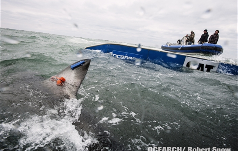 OCEARCH and the New York Aquarium Lead Shark Expedition in Long