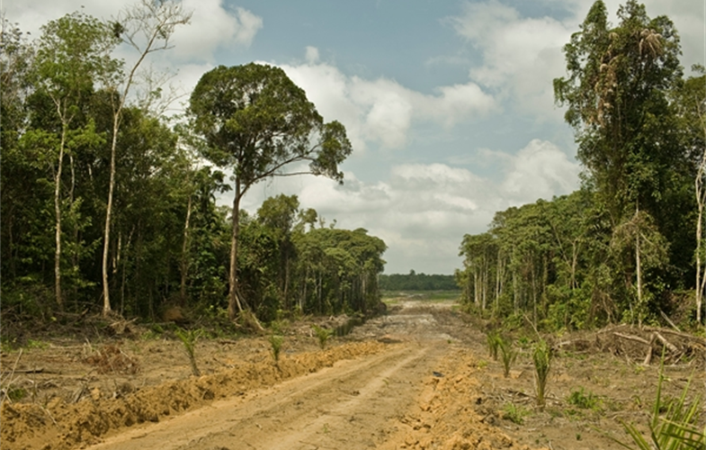 Road for oil plantations in West Kalimantan Indonesia CREDIT  Rainforest Action Network